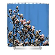 Early Flowering Magnolia Shower Curtain