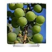Early Grapes Shower Curtain