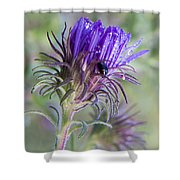 Early Knapweed Shower Curtain