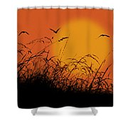Early Light Shower Curtain