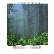 Early Morning In The Forest, Humboldt Shower Curtain