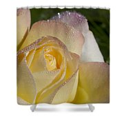 Early Morning Peace Rose Shower Curtain