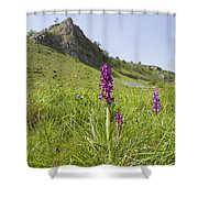 Early Purple Orchids Shower Curtain