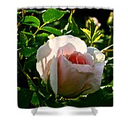 Early Rose Shower Curtain