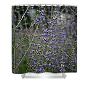 Early Russian Sage Shower Curtain