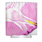 Earthworm, Transverse Section Shower Curtain