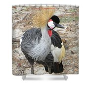 East African Crowned Crane  Shower Curtain