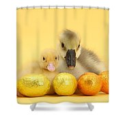 Easter Duckling And Gosling Shower Curtain