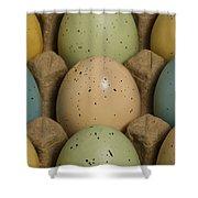 Easter Eggs Carton 1 A Shower Curtain