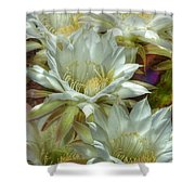 Easter Lily Cactus Bouquet Hdr Shower Curtain