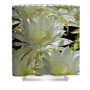 Easter Lily Cactus Bouquet Shower Curtain