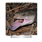 Eastern Blue-tongue Skink Threat Display Shower Curtain