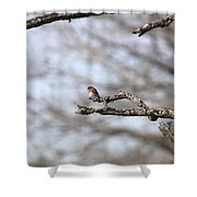 Eastern Bluebird - Old And Alive Shower Curtain