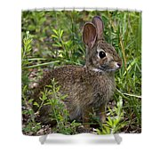 Eastern Cottontail Rabbit Dmam005 Shower Curtain