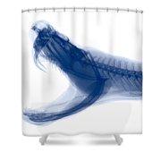 Eastern Diamondback Rattlesnake, X-ray Shower Curtain