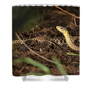 Eastern Garter Snake - Checkered Coloration Shower Curtain