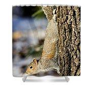 Eastern Gray Squirrel Sciurus Shower Curtain