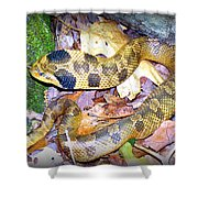 Eastern Hognose Snake Shower Curtain by Kathy  White