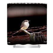 Eastern Phoebe - Sayornis Phoebe Shower Curtain