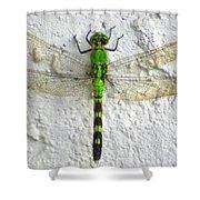 Eastern Pondhawk Dragonfly Shower Curtain