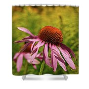 Eastern Purple Coneflower Shower Curtain