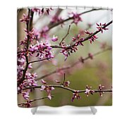 Eastern Redbud Asian Style Shower Curtain
