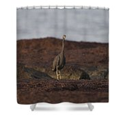 Eastern Reef Egret-dark Morph Shower Curtain