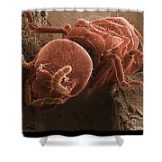 Eastern Subterranean Termite, Sem Shower Curtain by Ted Kinsman