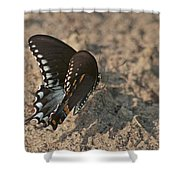Eastern Tiger Swallowtail 8526 3205 Shower Curtain