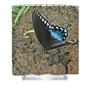 Eastern Tiger Swallowtail 8537 3215 Shower Curtain
