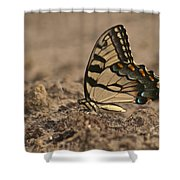 Eastern Tiger Swallowtail 8542 3219 Shower Curtain