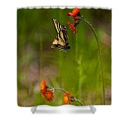Eastern Tiger Swallowtail Profile Shot Shower Curtain