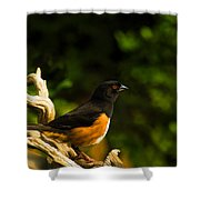 Eastern Towhee Shower Curtain