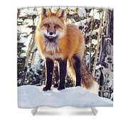 Eating Snow Shower Curtain