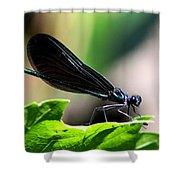 Ebony Jewelwing In The Spotlight Shower Curtain