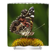 Echinacea Butterfly Meal Shower Curtain