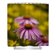 Echinacea Dreamy Shower Curtain