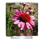 Echinacea In Water Shower Curtain