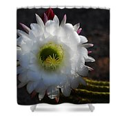 Echinopsis Candicans Shower Curtain