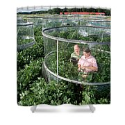 Effects Of Co2 On Soy Shower Curtain