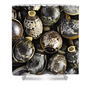 Eggs Of Stick Insect Shower Curtain