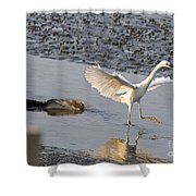 Egret Being Chased By Alligator Shower Curtain