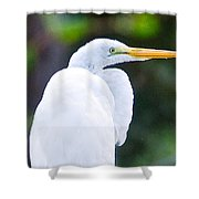 Egret Preening Shower Curtain