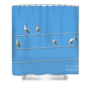 Egrets On A Wire Shower Curtain
