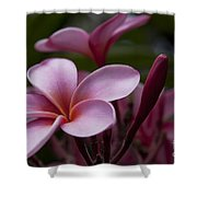 Eia Ku'u Lei Aloha Kula - Pua Melia - Pink Tropical Plumeria Maui Hawaii Shower Curtain