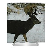 Eight Points Shower Curtain
