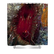 Electric Clam, Lembeh Strait, North Shower Curtain