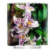 Elegant Beallara Orchid Shower Curtain