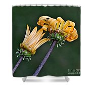 Elegant Daisies Shower Curtain