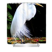 Elegant Egret At Water's Edge Shower Curtain